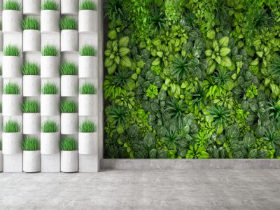 Zielona ściana - w jaki sposób o nią dbać, aby cieszyła nasze oko 7 - Twój Głos 📢 e-TG.pl