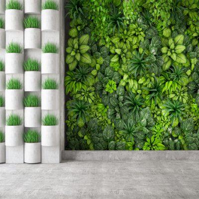 Zielona ściana - w jaki sposób o nią dbać, aby cieszyła nasze oko 6 - Twój Głos - e-TG.pl